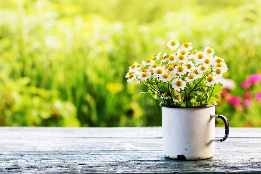 SJH-spring-garden-900x600